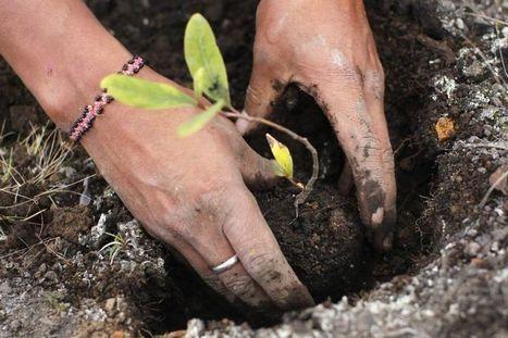 L'humus, arme suprême contre le CO2? | Ecologie, Agro-écologie, Enseignement agricole | Scoop.it