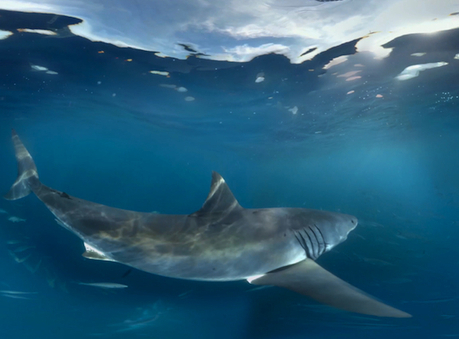 Samsung demos new virtual reality technology with 360-degree great white shark experience  - Marketing Magazine   Marketing   Scoop.it