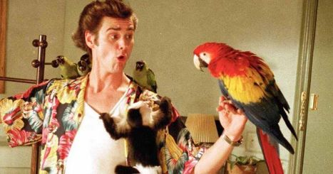 Play the Ace Ventura Mirror Bingo game and relive Jim Carrey's funniest moments | MOVIES VIDEOS & PICS | Scoop.it