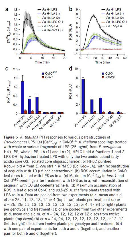 Nature Immunology: A lectin S-domain receptor kinase mediates lipopolysaccharide sensing in Arabidopsis thaliana | Effectors and Plant Immunity | Scoop.it