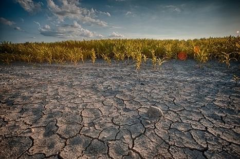 Grand Prix Google Science Fair : lutter contre la sécheresse avec du zeste d'orange   EFFICYCLE   Scoop.it