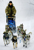 Northland sled dog team collides with truck during Michigan race; one dog killed | Minnesota Pet News | Scoop.it