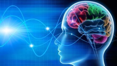 Cerveau : quand les hémisphères s'entraident - Le Figaro | education | Scoop.it