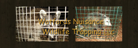 Watford's Nuisance Wildlife Trapping offers rodent control service | Watford's Nuisance Wildlife Trapping | Scoop.it