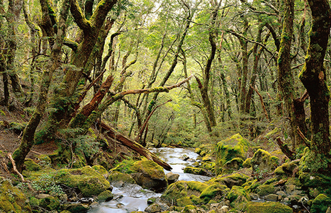 Tassie forests added to World Heritage Area | Australian Plants on the Web | Scoop.it