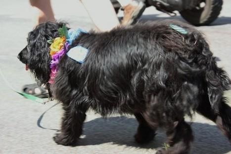 Minneapolis pups have Pride | Minnesota Pet News | Scoop.it
