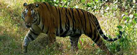 Wildlife Travel India,Wildlife Tour India,Wildlife Holiday India | India Tour Travel Packages 2014 | Scoop.it