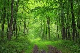 Mengenali Manfaat Hutan Bagi Kehidupan Di Bumi   Pemanasan Global   Scoop.it