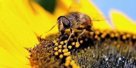 L'utilisation des insecticides «tueurs d'abeilles» est toujours en forte augmentation - le Monde | Actualités écologie | Scoop.it