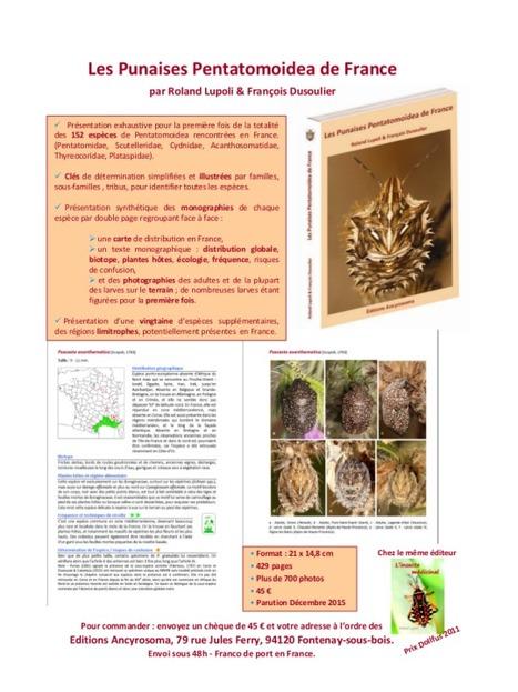Les Punaises Pentatomidea de France | Nouvelles arthropodes | Scoop.it