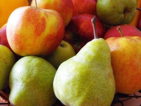 Help Stop the Use of Antibiotics in Organic Apple and Pear Production | Searching for Safe Foods | Scoop.it