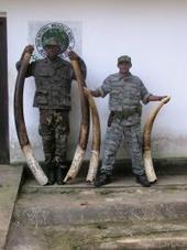 Conservationists get SMART with poachers | Wildlife Trafficking: Who Does it? Allows it? | Scoop.it