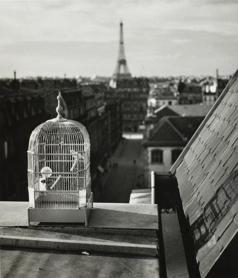 André Kertész: the photographer's photographer –in pictures   Real photography - Film photography   Scoop.it
