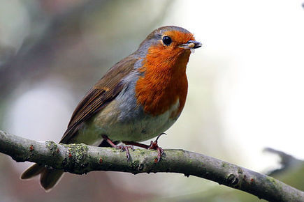 Noise from Our Electronics Disorients Migratory Birds   No Such Thing As The News   Scoop.it