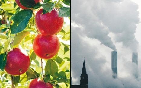 Ekoäpplen kan inte rädda en miljö-ovänlig värld | Contemporary Culture Through Intersectional Eyes | Scoop.it