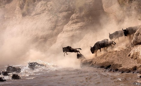 The Most Dramatic Animal Migrations Captured On Camera | ART  | Conceptual Photography & Fine Art | Scoop.it
