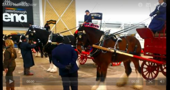 Video/photos: Final shire horse show in Peterborough | Horses