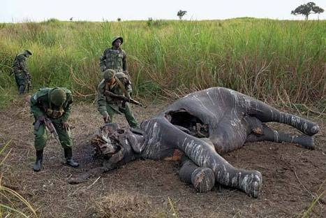 2013 in Review: Elephant Poaching | Wildlife Trafficking: Who Does it? Allows it? | Scoop.it