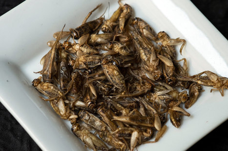 A Mouth Full of Crickets? Lobbyists Speak Up for Edible Insects | Entomophagy: Edible Insects and the Future of Food | Scoop.it