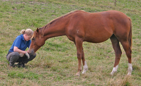 Breed personalities linked to genetic differences - Horse Breeds, News, Research - Horsetalk.co.nz | The wonderful world of horses | Scoop.it