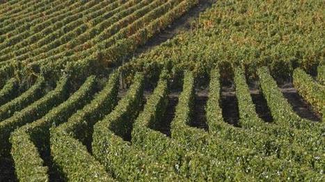 Les vignobles français attirent les convoitises   Le vin quotidien   Scoop.it