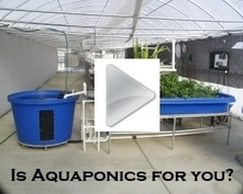 Choosing a Pump for Your Aquaponics System | Aquaponics~Aquaculture~Fish~Food | Scoop.it