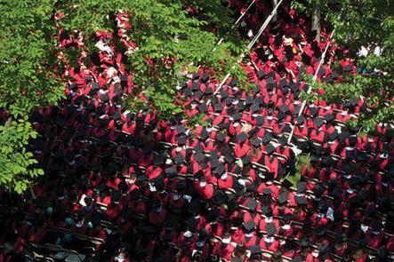 Harvard University | Working Dogs | Scoop.it