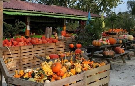 Que mange-t-on en octobre ? | The Blog's Revue by OlivierSC | Scoop.it