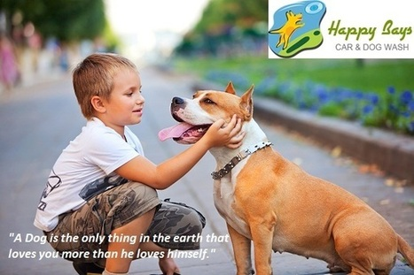 7 Reasons Why A Pet Dog Can be Your Best Friend Forever | Know about Your Car Wash Services in Calgary from Happy Bays | Scoop.it