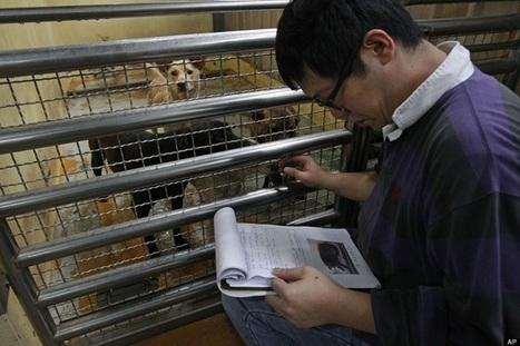 La (triste) historia de un refugio para perros en Taiwán (FOTOS) | Ecoosfera | Fashion Models Photography | Scoop.it