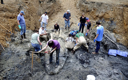 Students help unearth 75-foot whale skeleton | Mendocino County Living | Scoop.it
