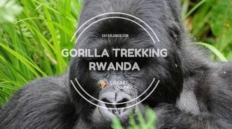 Gorilla Trekking in Rwanda | Safari Junkie | Africa Travel | Scoop.it