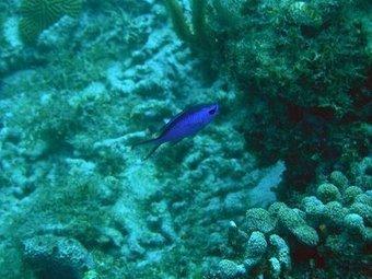 Fish of the Mesoamerican Barrier Reef | Belize in Social Media | Scoop.it