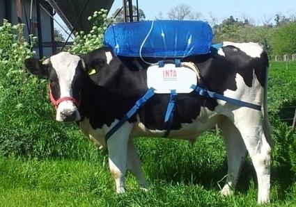 El gas de las vacas puede alimentar un motor | Educación y Tecnologías | Scoop.it
