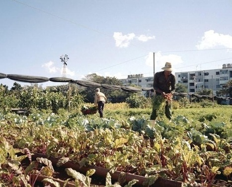 Cuba's Urban Farming Revolution: How to Create Self-Sufficient Cities | Cultibotics | Scoop.it