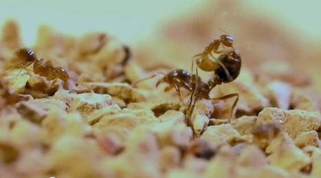 Des nouvelles des insectes : Invincible sous acide | EntomoNews | Scoop.it