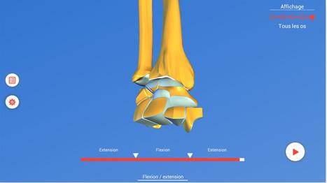 Les mouvements du poignet   Anatomie 3D   Pédagogie et Multimédias   Scoop.it