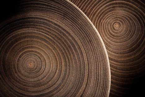What Tree Rings Tell Us About the Climate | JSTOR Daily | Erba Volant - Applied Plant Science | Scoop.it