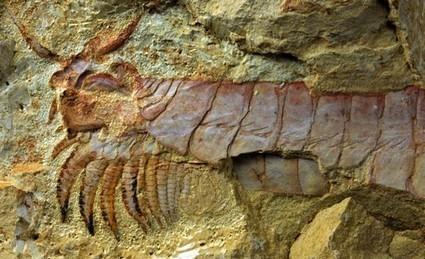 La tête et les jambes… Des premiers arthropodes ! | EntomoNews | Scoop.it