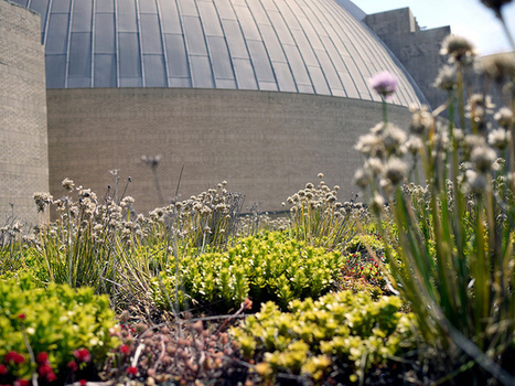 The Cincinnati Museum Center's green roof - 5chw4r7z:: the ethos of ... | Vertical Farm - Food Factory | Scoop.it