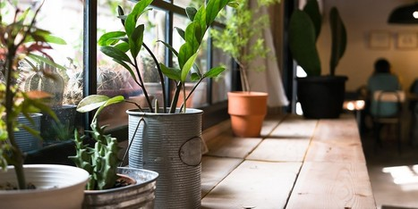 20 Plants That Improve Air Quality in Your Home | Healing our planet | Scoop.it