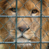 Campaign Against Canned Hunting | Biodiversity IS Life -- Conservation,Ecosystems,Wildlife,Rivers,Water,Forests | Scoop.it