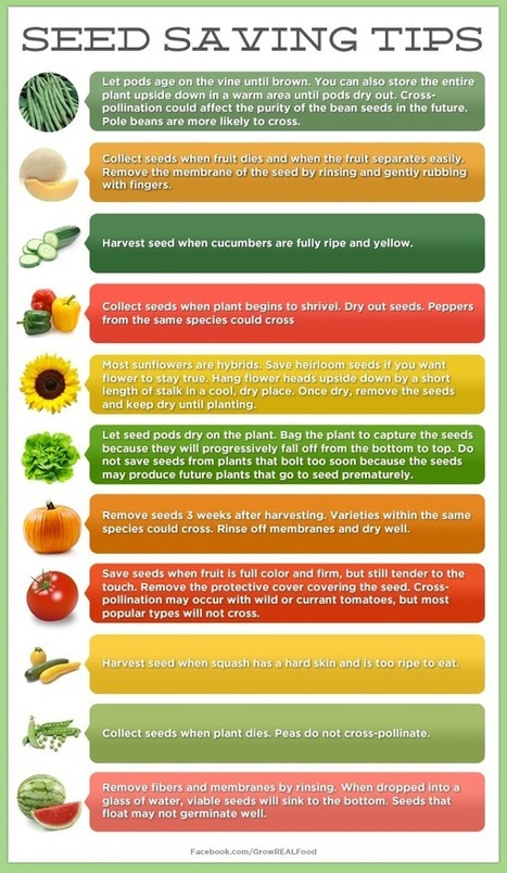 Seed Saving Tips | Grow REAL Food - Organic, Non-GMO Food in Your Backyard | Balcony Gardening | Scoop.it