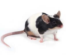 Cosmetics Tests That Use Animals : The Humane Society of the United States | Banning of Cosmetic Animal Testing | Scoop.it