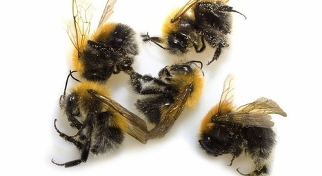 EPA: Those bee-killing pesticides? They're actually pretty useless.   sustainability and resilience   Scoop.it