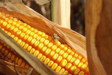 Des Etats-Unis à la Suisse, Monsanto attaqué sur tous les fronts | Shabba's news | Scoop.it