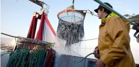 La pêche durable en pleine expansion, mais pas partout | HALIEUTIQUE ECOLOGIE MARINE | Scoop.it