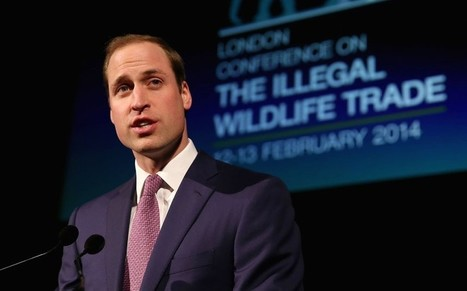 Duke of Cambridge wants to destroy royal ivory in fight against poaching   GarryRogers NatCon News   Scoop.it