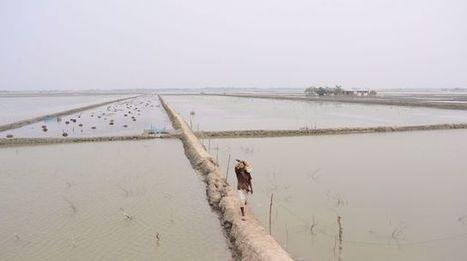 Un tiers du Bangladesh bientôt sous l'eau | Développement durable et efficacité énergétique | Scoop.it