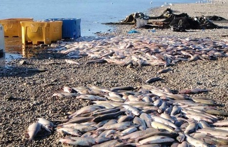 Fisheries need focus on sustainability: Environmental report   Sustainable Futures   Scoop.it